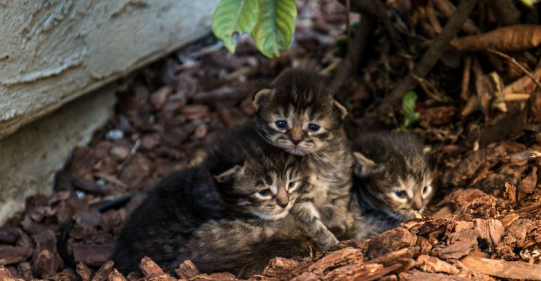 Australia is trying to kill millions of stray cats by airdropping poisoned sausages