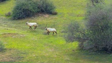 Qatar marks Biological Diversity Day