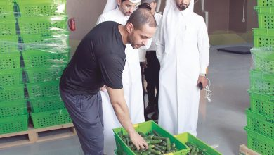 Photo of Mahaseel begins marketing local produce