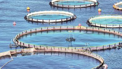 QR 230mn Aquatic Research Centre set to open