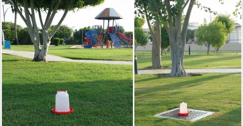 Water pots for birds in Al Shamal parks