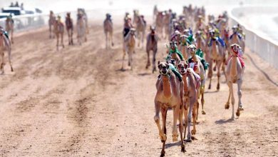 Camel racing organising panel announces rules for new season
