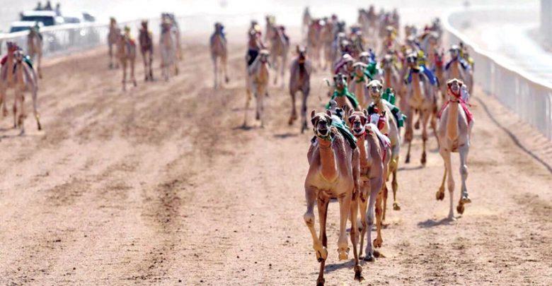 Camel racing organising panel announces rules for new season