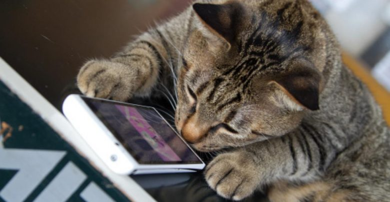 Cat Caught by Penitentiary Police Smuggling Cell Phones for Inmates in Costa Rica