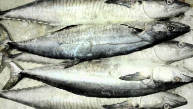 Ban on fishing King Fish from August 15