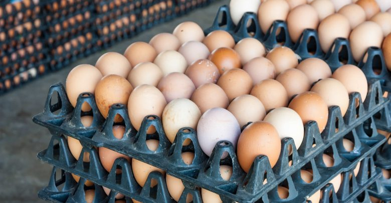 MME introduces owners of farms to localization of egg production