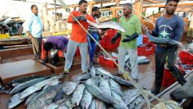 Photo of Ministry to issue daily price bulletin for fish