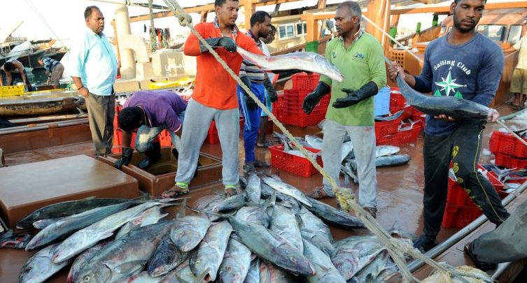 Ministry to issue daily price bulletin for fish