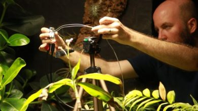 Plant 'takes' botanical world's first selfie