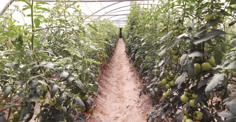 Khayr Qatarna greenhouses installed at three QF schools
