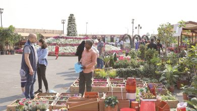 Photo of Demand soars for varieties of flowers & ornamental plants at Mahaseel Festival