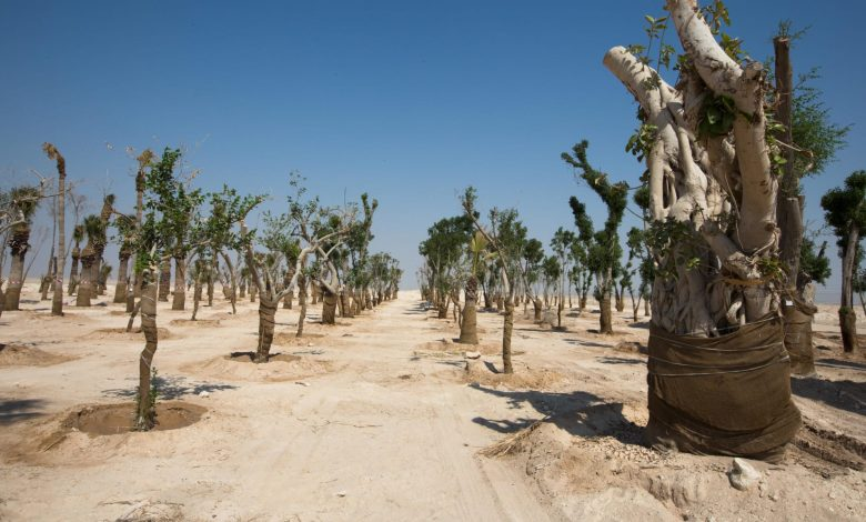 2022 trees to be Planted by the 2022 World Cup