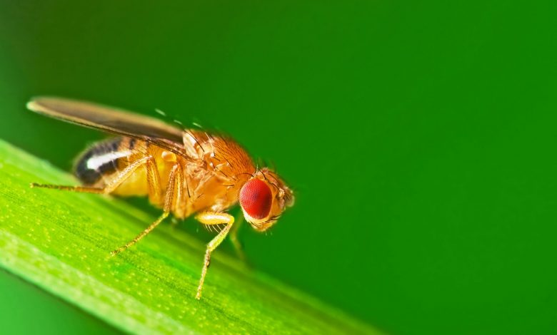 What does a fly's brain look like after scientists succeed in creating a detailed map for it?