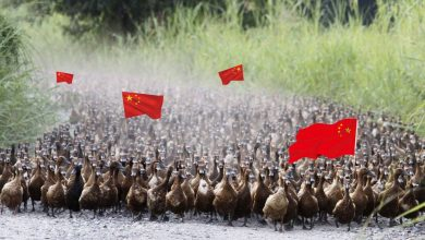 Photo of With an army of ducks … China is preparing to go to war with locusts