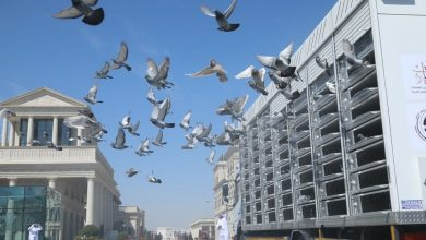 Photo of 17 countries take part in pigeon exhibition at Katara