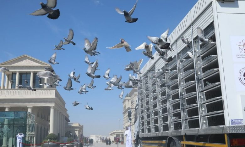 17 countries take part in pigeon exhibition at Katara