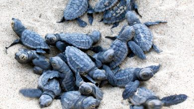 Photo of Turtle nests relocated for safety