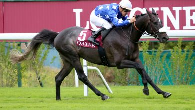 Photo of Amyr Du Soleil – a champion in the making for Al Shahania