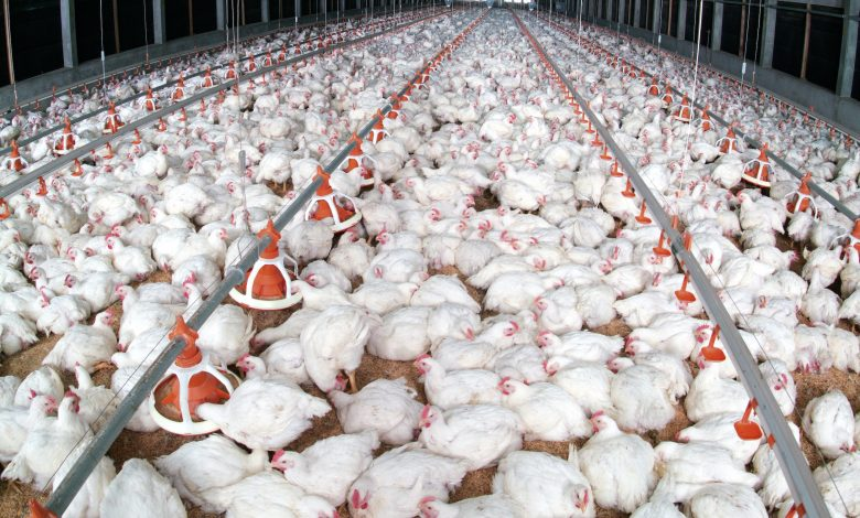 Raising poultry production locally to 10 million annually