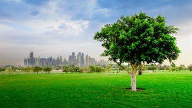 Ministry reopens Al Bidda park for exercise