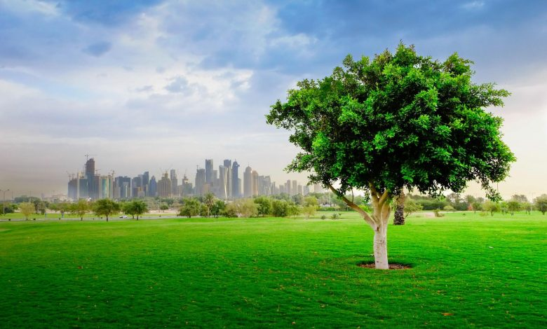 Ministry reopens Al Bidda park for exercise