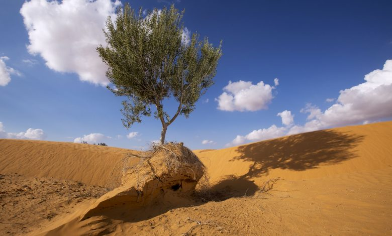 National plan of action to combat desertification
