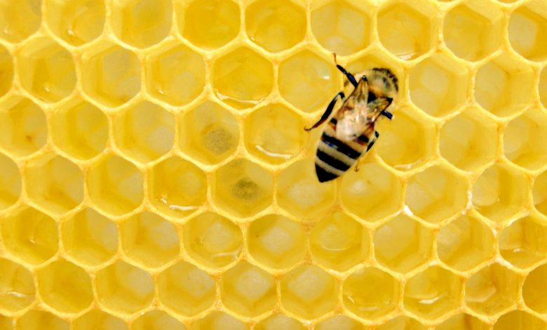 Qatar's domestic honey production rises as more queen bees distributed among farmers