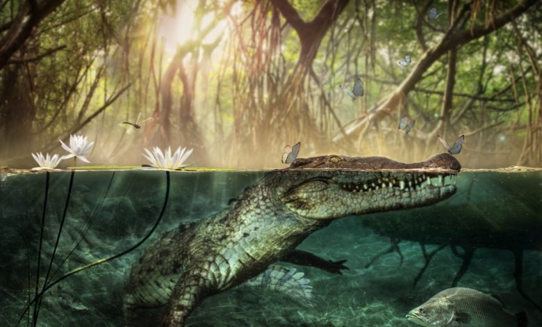 Crocodiles traveled from Africa across the Atlantic Ocean to settle in America .. Here is the full story