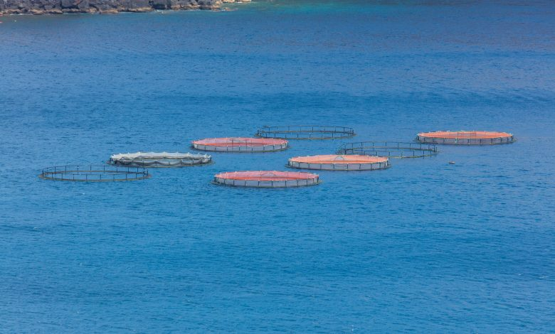 MME releases 4,300 baby Hamours in sea