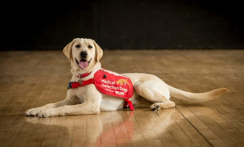 Dogs are being trained to sniff out coronavirus cases