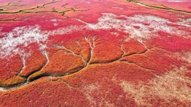 "Photo of ""Red Beach"" in China .. ""Unusual"" romance on crimson flats"