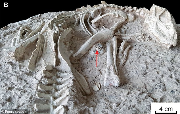 New species of dinosaurs  buried alive about 125 million years ago discovered in China
