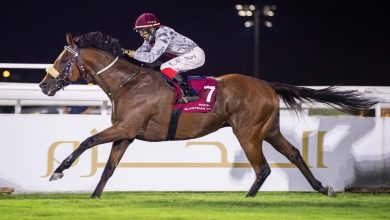 Photo of Qatar Racing's KINGSHOLM Back in Winners' Enclosure at Wolverhampton