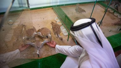 Photo of Katara International Hunting and Falcons Exhibition Concludes