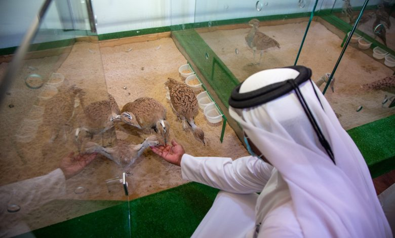 Katara International Hunting and Falcons Exhibition Concludes