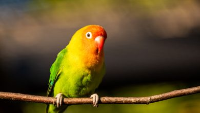 Photo of British park abandons 5 parrots for some strange reason