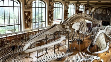 Photo of Dinosaur skeleton breaks record at auction