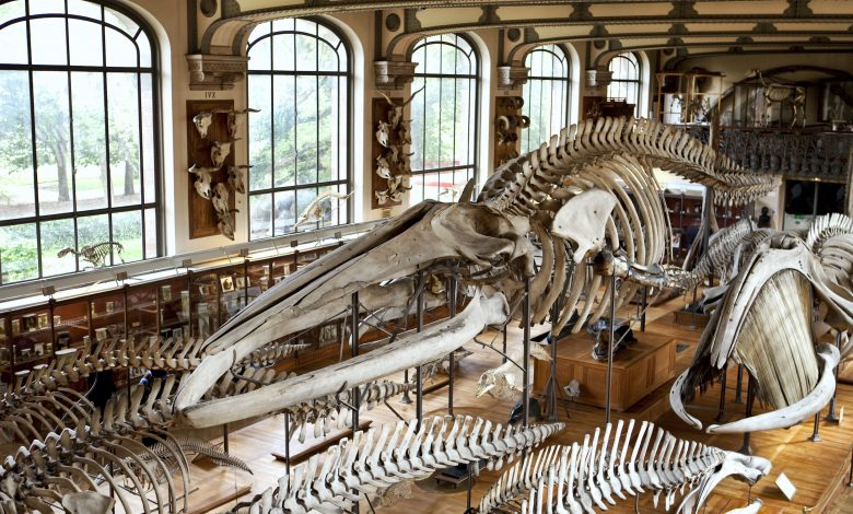 Dinosaur skeleton breaks record at auction