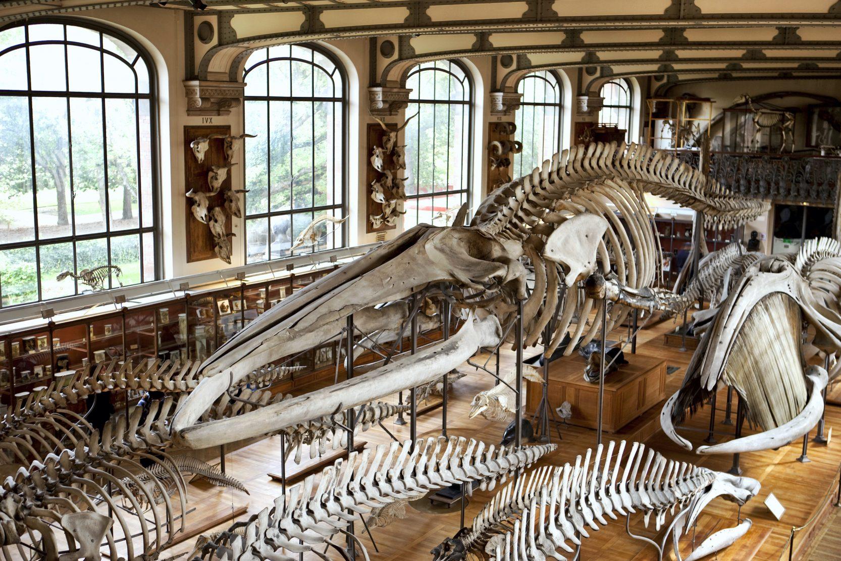 Dinosaur skeleton breaks record at auction