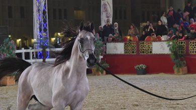 Photo of Katara To Host Qatar International Arabian Horse Championship
