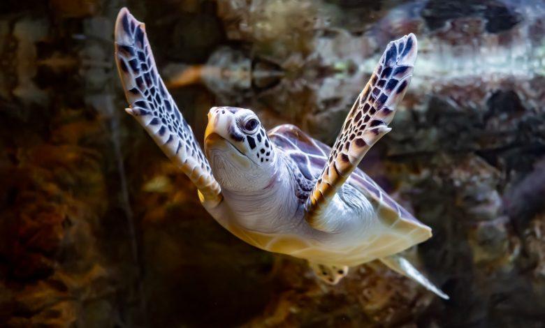 Sea turtle rescued at Al Ghariya Beach