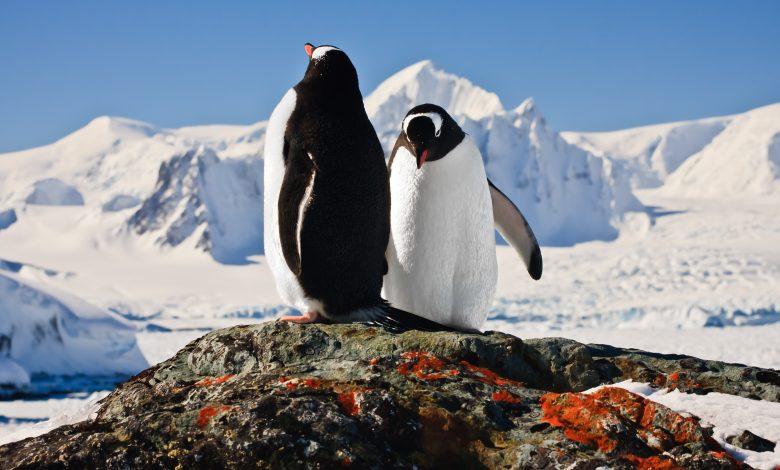 Antarctica is experiencing its hottest temperatures in 3 decades