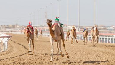Photo of Founder Camel Festival Kicks Off