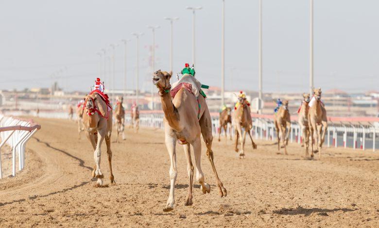 Founder Camel Festival Kicks Off