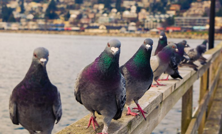 """""""Pigeon"""" sold at auction for 1.6 million euros"""
