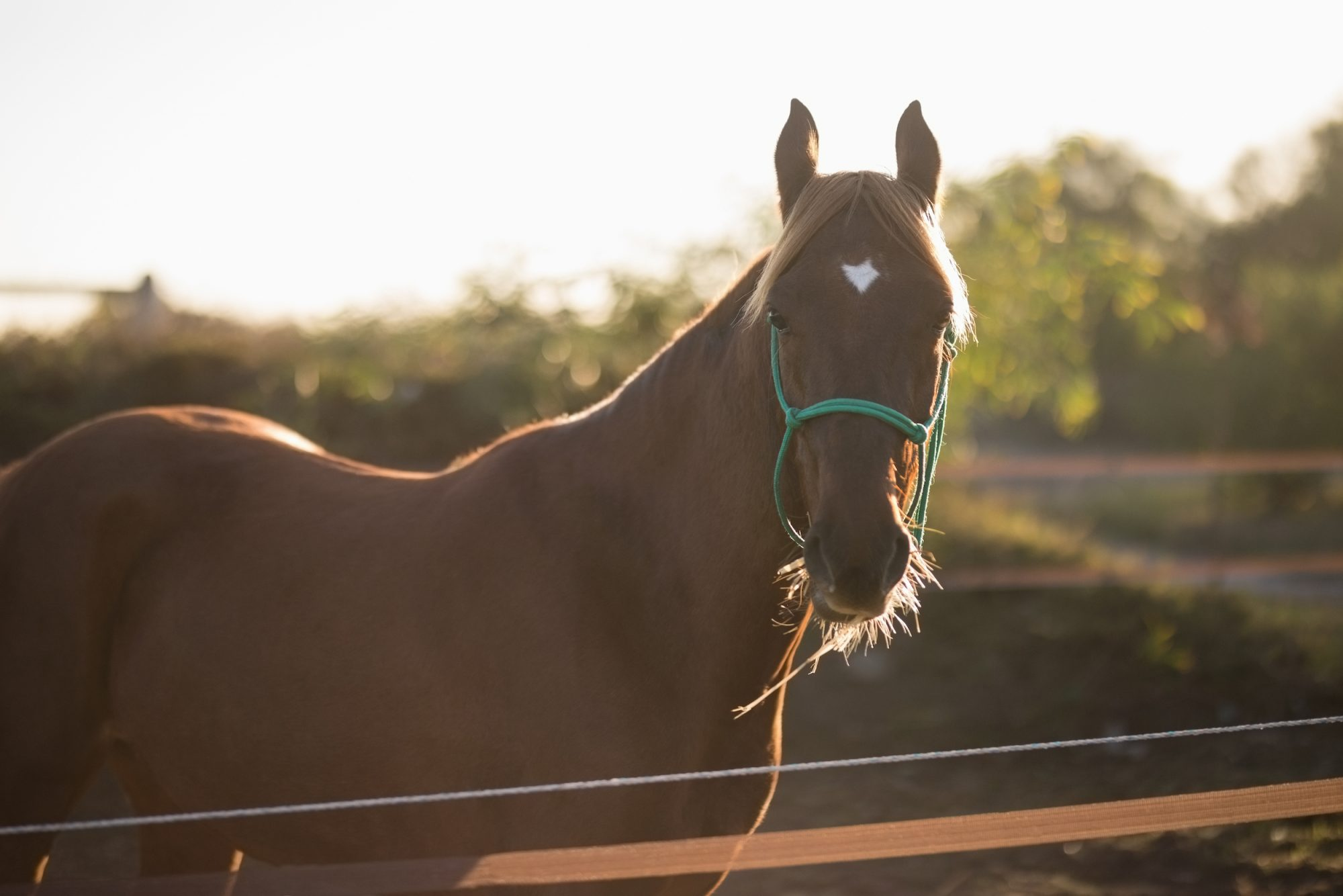 QF's Equine Veterinary Medical Center to Oversee Local Animal Research