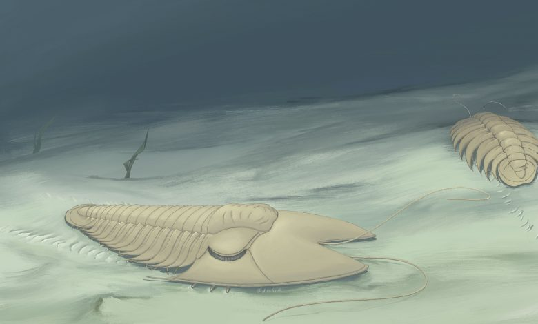 Chinese scientists find 500-mln-year-old peculiar trilobite fossil