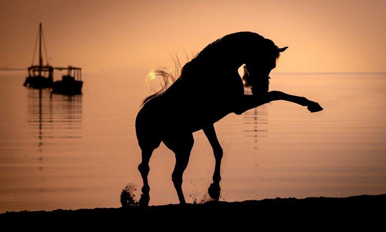 Details of Katara International Arabian Horse Festival Announced