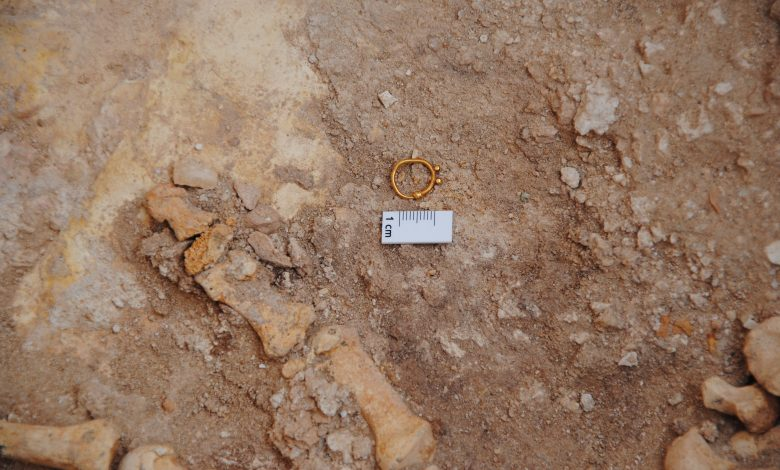 Female camel and her baby sacrifice along the remains of important figures .. Discoveries in Qatar date back to 300 BC