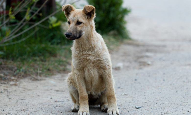 Solution for stray dogs on Qatar streets soon: Ministry